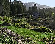 Lombachalp Moorlands