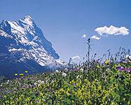 Bärentrek - Hintere Gasse Meiringen-Adelboden oder Lenk