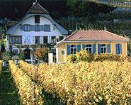 Wine tasting centre Viniterra Lake Biel