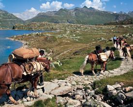Sbrinz-Route: 3 Pässe - ein Erlebnis