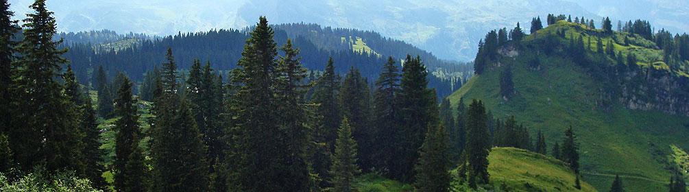 Urwaldweg Bödmeren